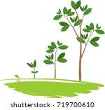 stages of growth of a tree from ... | Shutterstock .eps vector #719700610