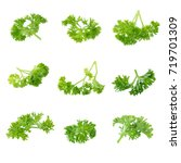 fresh branch of green parsley... | Shutterstock . vector #719701309