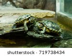 Small photo of turtles ,Turtles on the ground,beautiful turtles