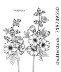 hand drawn and sketch hollyhock ... | Shutterstock .eps vector #719739550