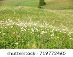 hilly field with daisies   Shutterstock . vector #719772460