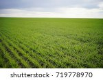 field of winter wheat on a... | Shutterstock . vector #719778970