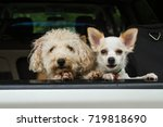 Small photo of Two dogs in car. They are my friend.