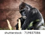 portrait of a gorilla male ... | Shutterstock . vector #719837086