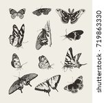 Stock vector collection of ink drawn butterflies 719863330