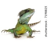 bearded dragon in front of a...   Shutterstock . vector #7198825