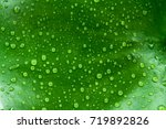 water drop leaves | Shutterstock . vector #719892826