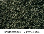 old leaves. nature background.... | Shutterstock . vector #719936158