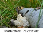 Coral Forest Mushroom Near The...