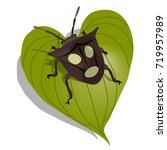 realistic insect vector... | Shutterstock .eps vector #719957989