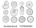 tree rings graphic... | Shutterstock . vector #719960404