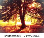 glowing sun autumn tree  | Shutterstock . vector #719978068