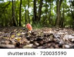 red mushrooms growing on a... | Shutterstock . vector #720035590