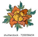 hand drawn peony flower.chinese ... | Shutterstock .eps vector #720058654