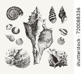 Ink Drawn Seashells And Snails