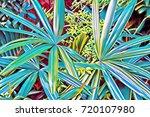 cyan blue tropical leaf top... | Shutterstock . vector #720107980
