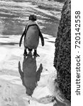 Small photo of African Penguin on the beach