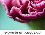 Beautiful Flower In Macro