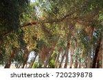 green   orange trees   forest.... | Shutterstock . vector #720239878