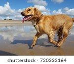 Happy Dog Running On Beach