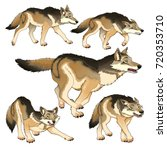 group of isolated wolves.... | Shutterstock .eps vector #720353710