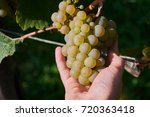grapes in a child hand   Shutterstock . vector #720363418