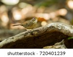 cute puff throated babbler or... | Shutterstock . vector #720401239