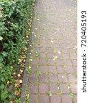 in the park. paving. green bush.... | Shutterstock . vector #720405193