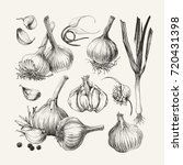 ink drawn collection of garlic | Shutterstock .eps vector #720431398
