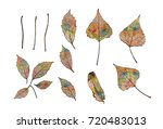 silhouettes of leaves of poplar ... | Shutterstock . vector #720483013