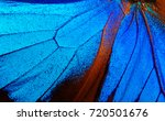 wings of the butterfly ulysses. ... | Shutterstock . vector #720501676