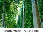 green ivy on high building | Shutterstock . vector #720511588