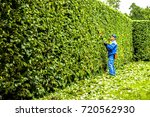 man is cutting hedge in the... | Shutterstock . vector #720562930