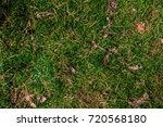 Background Of Moss In The Forest