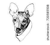 dog. vector illustration.... | Shutterstock .eps vector #720585508