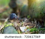 mushroom in the autumn forest... | Shutterstock . vector #720617569