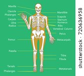 medical education chart of... | Shutterstock .eps vector #720636958