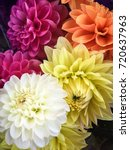 Colorful Flowers Dahlia In...