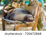 Sea Lion Sleeping On A Park...