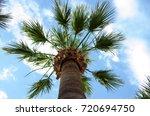 palm | Shutterstock . vector #720694750