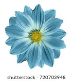 turquoise yellow flower daisy... | Shutterstock . vector #720703948