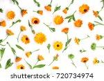 Calendula. Marigold Flower...