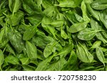 Fresh Spinach Leaves As...