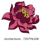 colorful lotus vector... | Shutterstock .eps vector #720796108