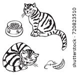 hand drawing scottish cat sits... | Shutterstock .eps vector #720823510