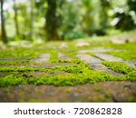 Beautiful Green Moss On The Re...