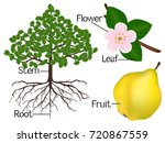 the illustration shows part of... | Shutterstock .eps vector #720867559