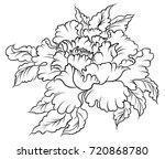hand drawn peony flower chinese ... | Shutterstock .eps vector #720868780