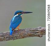 beautiful bird  common... | Shutterstock . vector #720869068