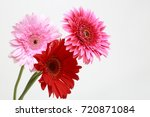 beautiful and tender blossom... | Shutterstock . vector #720871084